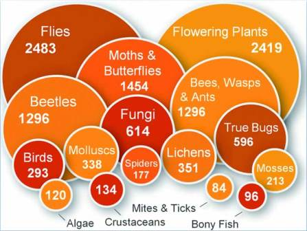Numbers of species in iRecord (Tom August, CEH)
