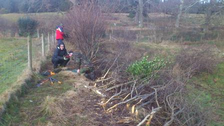 Hedge laying at Brodick Castle & Country Park, Isle of Arran (J. Kemp)