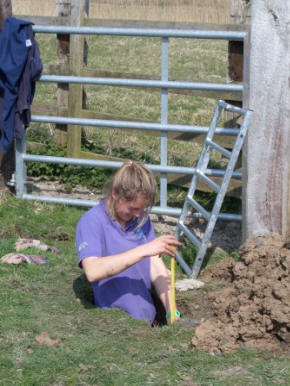 Chloe Goddard, one of RSPB Dungeness' 2015  volunteer interns, assisting in the building of a  cattle handling pen (RSPB Dungeness Staff)