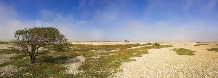 The unique landscape of RSPB Dungeness (Ben Hall (rspb-images.com))