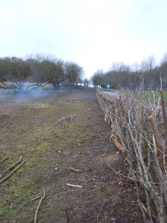 Hedge layed at Staunton Harold reservoir by Volunteer Rangers