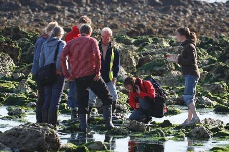 Shoresearch team recording marine life © Greg Hitchcock