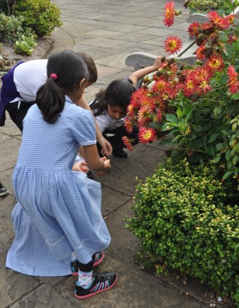 Year 4 pupil from Slade Primary School investigating plants at the Botanical Gardens.  (H.Gregory, NAEE)