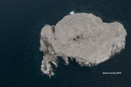 Aerial shot of Bass Rock (Stuart Murray)