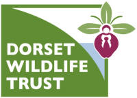 Logo: Dorset Wildlife Trust