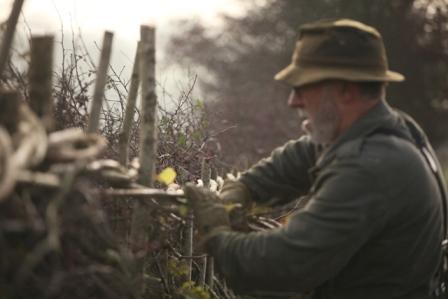 Midlands style hedgelaying (Gareth Kingdon)