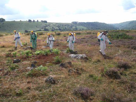 NYMNPA apprentices spraying bracken (NYMNPA)