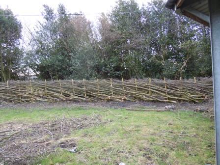 A Derbyshire (style) hedge layed by Derrick Hale (D.J. Hale)