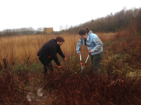 Swansea University students working on the SITA funded Lapwing  Revival Project at Parc Slip Nature Reserve (Rose Revera)
