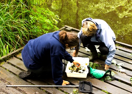 Pond Dipping as part of the Clear Streams Project in Swansea,  funded by Welsh Water and NRW (Robert Davies)