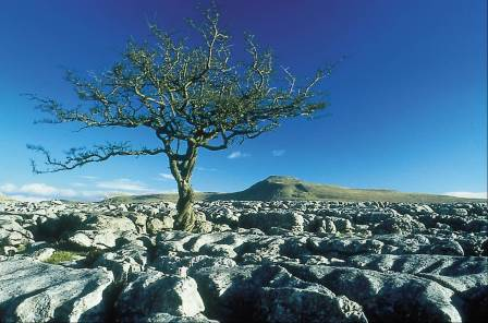 Limestone pavement (Picture courtesy of the Yorkshire Dales  National Park Authority)