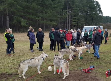 Dawn husky demo © S Jenkinson & The Kennel Club