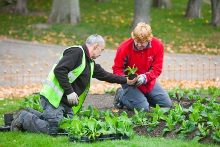 Bedding is characteristic of many historic parks but needs skilled gardeners, Battersea Park (Wandsworth Borough Council)