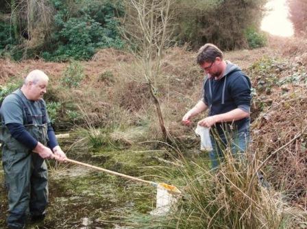 Netting amphibians for chytrid swabbing (Jonathan McGowan)