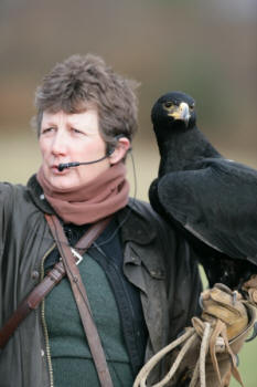 Jemima Parry-Jones with Adult  Verreaux's Eagle on Demonstration  (Linda Wright)