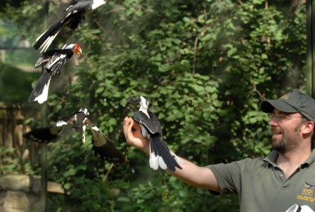 Colin working with a range of bird species at Edinburgh Zoo  (Royal Zoological Society of Scotland)