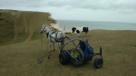 Beachy Head end of the South Downs Way, National Trail. Toby  working, Obama along for the ride (Pony Axe S)