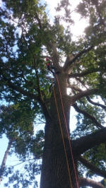 Arboriculture in Action  (Royal Forestry Society)