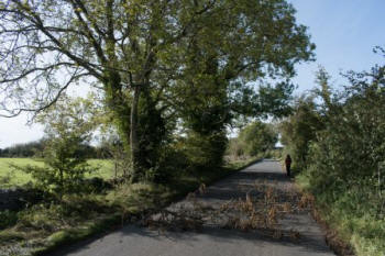 Ash trees shedding branches and increasing health and  safety risks (Tree Council)