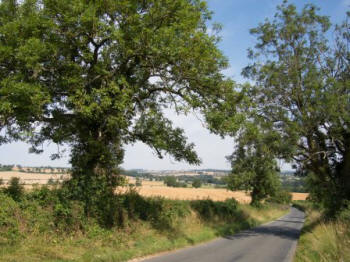 Ash landscapes - The Cotswolds (Tree Council)