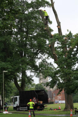 Site inspection of our tree contractor  Gristwood & Toms during tree works in  Vigo Recreation grounds (Amelia Williams)