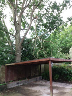 Failed oak limb hanging over a car port  in North Baddesley (Amelia Williams)