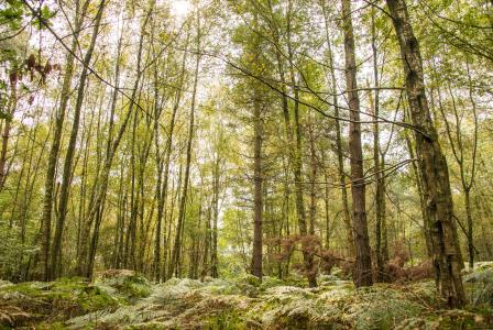 Ancient woodland: Scarce, beautiful and irreplaceable.  (Phil Formby/WTML)