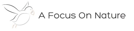 Logo: A Focus On Nature