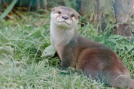 Otter (Ian Henderson)