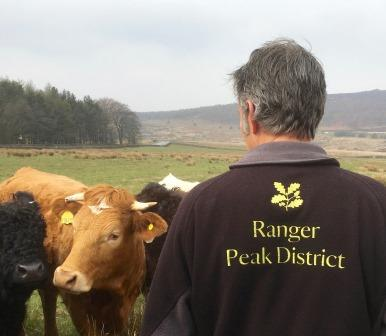 Area Ranger Chris Milner checking livestock at Longshaw  (Ted Talbot, National Trust)