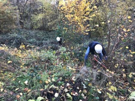 Students learning coppicing skills in the autumn (Earth Trust)