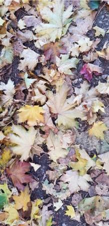 Autumn leaves © Tim Webb