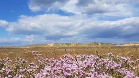 The subtle beauty of Holkham NNR with Matted Sea Lavender (Andy Bloomfield)