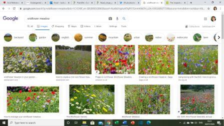 Figure 3: Google results from wildflower meadows (©Google)