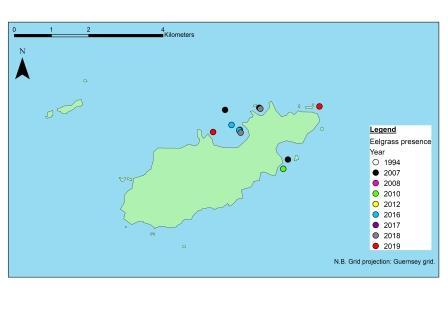 The presence of common eelgrass (Z. marina) identified within Alderney's waters, taken from past records to help inform the Bailiwick Eelgrass Exploration Project (©Mel Broadhurst-Allen, Alderney Wildlife Trust)