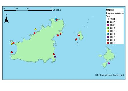 The presence of common eelgrass (Z. marina) identified within Guernsey's waters, taken from past records to help inform the Bailiwick Eelgrass Exploration Project (©Mel Broadhurst-Allen, Alderney Wildlife Trust)