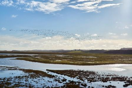 NWT Cley Marshes is a port of call for many birders and the birthplace of Wildlife Trusts in the UK (Richard Osbourne)