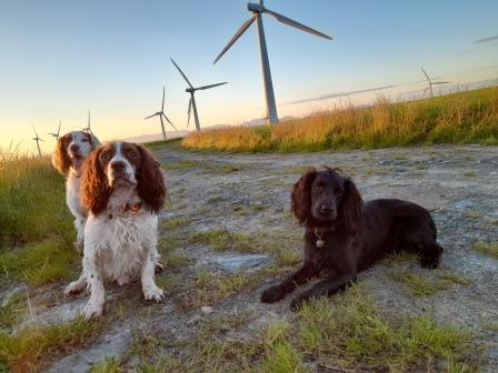 The Super Conservation team, Willow, Max and Stig (Picture courtesy of Rachael at Paws for Conservation)