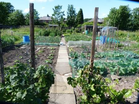 An allotment in Sheffield (Mike Edmonson)