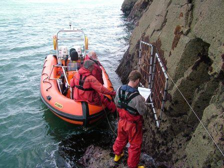 One of our monitoring team measuring scallops from the Marine Conservation Zone © NRW