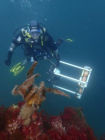 Our marine officer, Kate Lock, with a framer during some monitoring © NRW