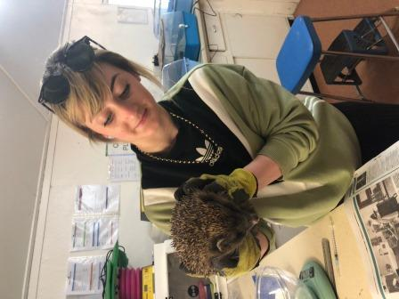 Kirsty currently works for an environmental charity and leads on several conservation projects including HogWatch Scotland (Kirsty Crawford)