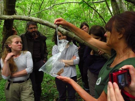 Dormouse surveying (Sue Searle)