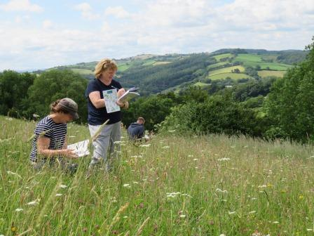 People in a meadow on a Beginners Botany course (Sue Searle)