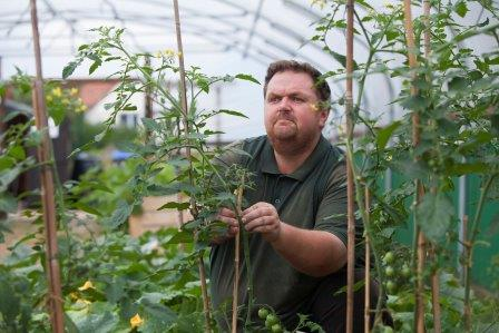 person tending to tomato plants in a polytunnel (Groundwork)
