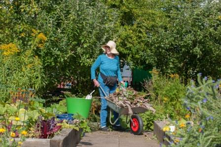 person wheeling a wheelbarrow in a community garden (Groundwork)