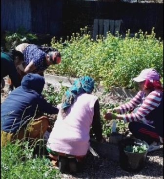 group of people gardening (National Academy for Social Prescribing)