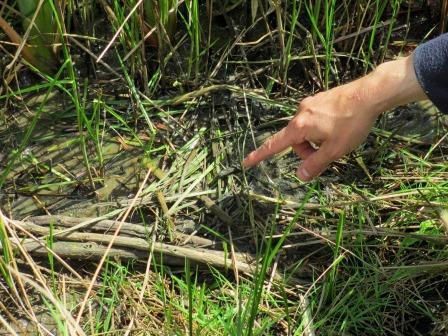 Water vole feeding station (E Marnham)