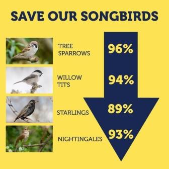 Song bird population decline in last 50 years (Songbird Survival)