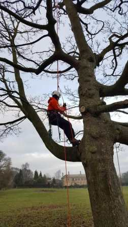 On a tree climbing course. There's always an opportunity to grow your skills (Barry Thompson)
